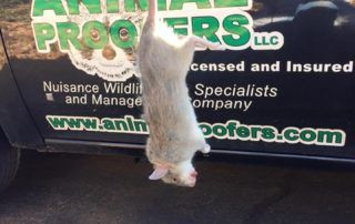 Animal Proofers Rodent Removal