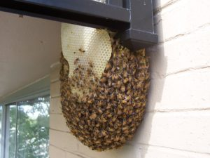 Animal Proofers Bee Removal and Exclusion