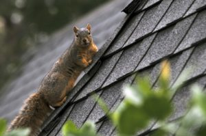 Get rid of squirrels braselton