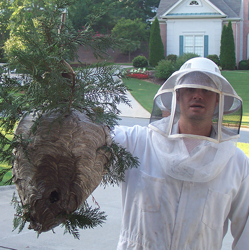 Animal Proofers Removes Hornets' Nest in Lawrenceville