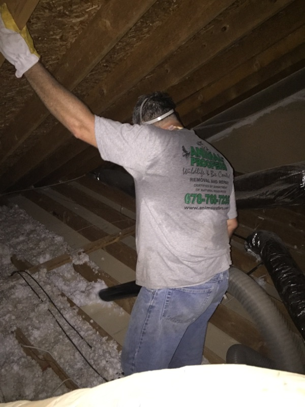 Technician removing insulation