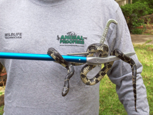 Snake Removal Braselton