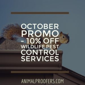 10% Off All Wildlife Pest Control Services